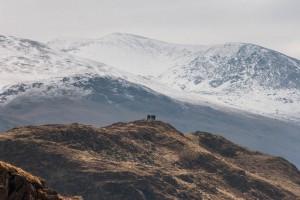 Walkers stand on Wren Crag